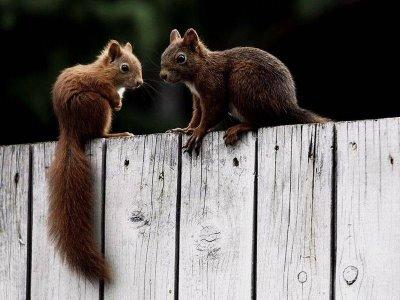 Esquilos terroristas e um rato que ameaça o mundo