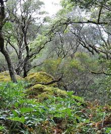 floresta_dest