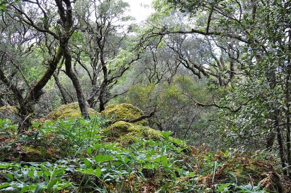 floresta_parteI