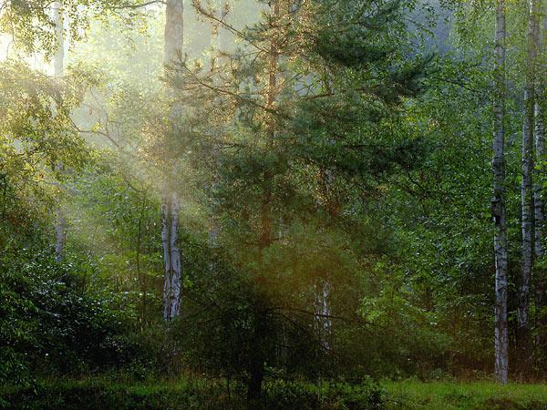 florestatuga