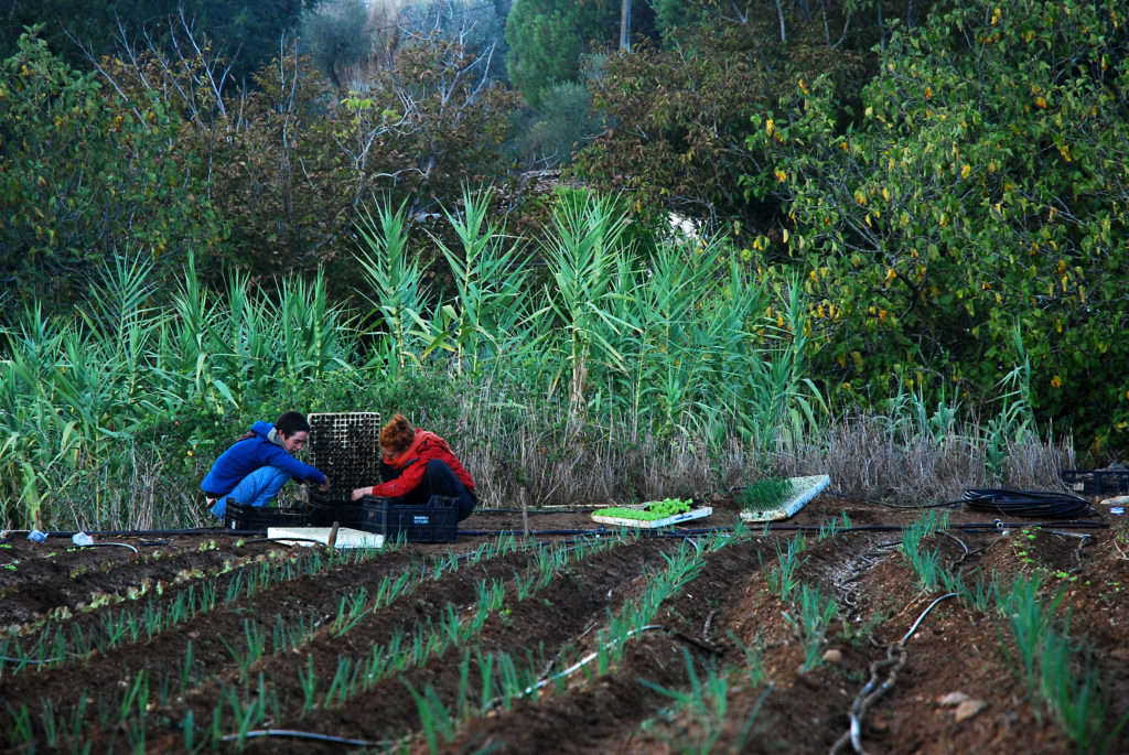 Em Montemor-o-Novo há uma cooperativa que vai do prato à casa