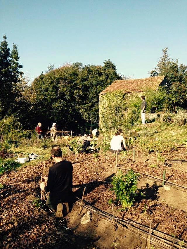 Dia de trabalho colectivo na Horta da Partilha. Foto: Luísa Carvalho, 2015