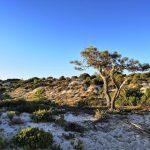 Sistemas dunares na zona da UNOP8 do Plano Urbanístico de Tróia. Fotografia de Catarina Rosa