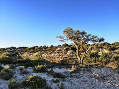 Grandes projectos turístico-imobiliários ameaçam a orla costeira entre Tróia e Melides