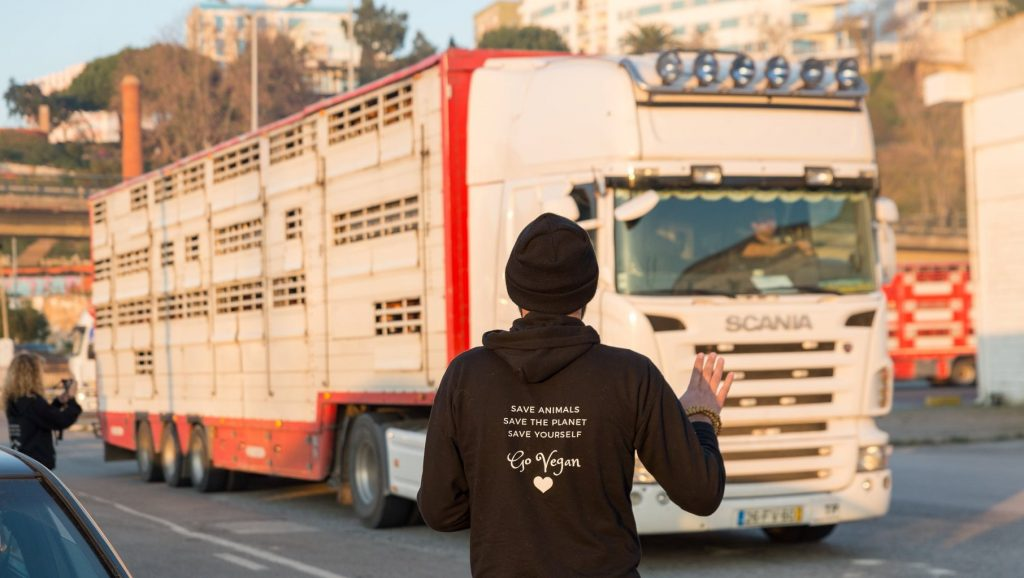 Sofrimento Animal: De Portugal a Israel