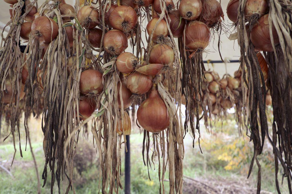 Uma Primavera Agroecológica