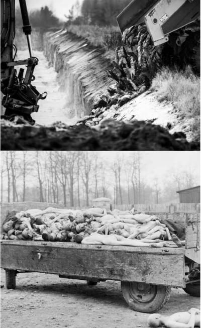 Holocausto Animal, para Bem da Humanidade