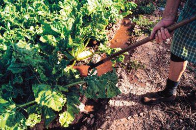 Cultivar à Margem - Hortografias